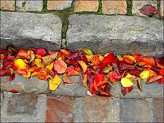 Arras -dead leaves and kerb (april-mo) Tags: deadleaves autumnleaves kerb arraspasdecalaisnorthernfrance