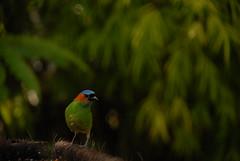 pajarito de chanfle (Lo Jipies) Tags: bird look animal pose selva colores bamboo ave animales pajaro bamb palmera pajarito comedero outoffocous