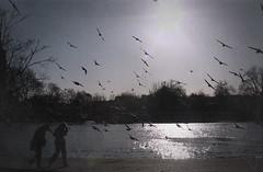 Hit me like a ray of sun (Do7a Chic) Tags: park winter light people sun london birds hyde 2009 do7achic