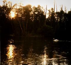 Unbenannt-30 by Lomo Lubitel 2 (angsti) Tags: wood sunset sea 2 lake film water analog germany bavaria evening swan lomo lubitel 100 analogue starnberg wald schwan reala würm gauting fujicolor würmtal