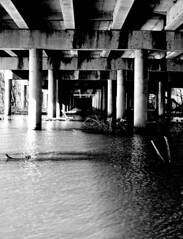 White Rock Lake 27 (A. Vandalay) Tags: bridge delete10 delete9 delete5 delete2 dallas nikon texas delete6 delete7 lakes parks save3 delete8 delete3 delete delete4 save save2 whiterocklake d300 parksandrecreation nikond300 deletedbydeletemeuncensored