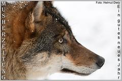 Wolf-Olderdissen