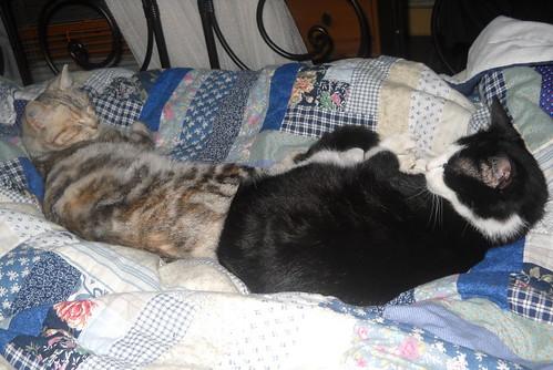 Je ne sais pas comment j'ai reussi a avoir cinq chats..... 4250738614_a66757ab33