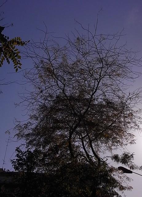 El árbol inquieto