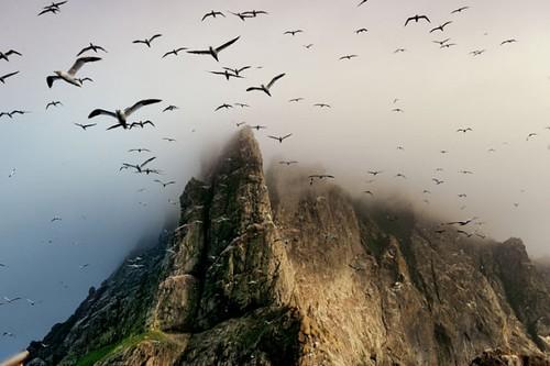 vogels hebriden
