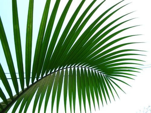 IMG_7880 Palm Leaves