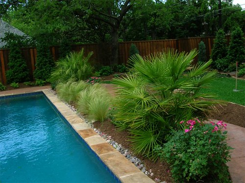 Pool Design /// Hardy  Palms, Knock Out Rose, Mexican Feather Grass