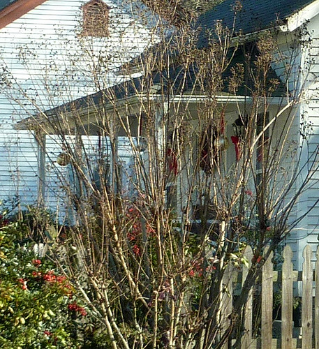 P1000222-2010-01-13-2-Scottdale-Gables-Porch-Through-Crepe-Myrtle