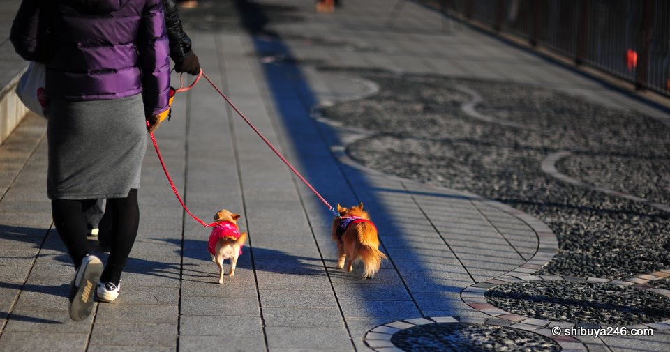 Colorful outfits on these dogs helping them to keep warm.