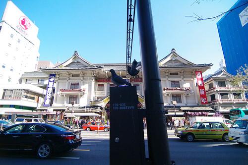 歌舞伎座*鳳凰気どり 22年1月