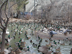 Zoo of Denver  DSCN0128_1