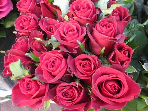 fuschia roses