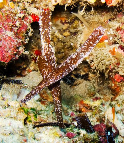 Bunaken Underwater 09