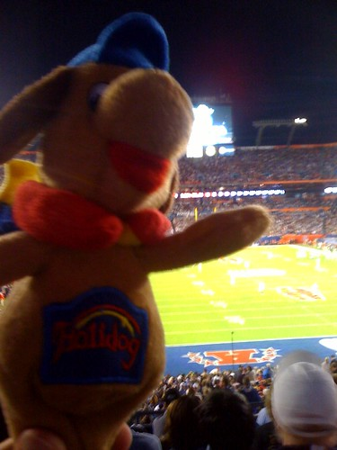 Holidog at the Super Bowl