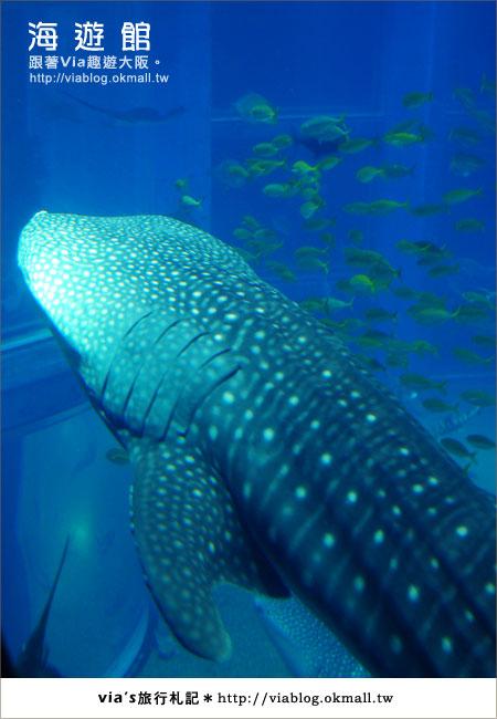 【via關西冬遊記】世界最大極的水族館~大阪海遊館15