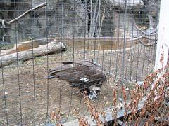 Zoo of Denver  DSCN1385