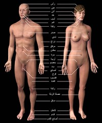 Basic_human_anatomy_labeledar (eligible2009) Tags: anatomy