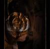 Good Friday (Mara ~earth light~) Tags: portrait bronze photoshop self gold creativecommons mystic hypothetical goodfriday karfreitag awardtree moodcreations daarklands mara~earthlight~