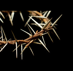 We shall always remember (Timothy TL) Tags: detail canon easter hongkong dof christ glory details jesus christian 7d crown thorns noahsark crownofthorns
