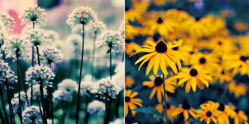 floral blog 1
