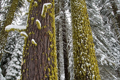 Moss and snow Photo