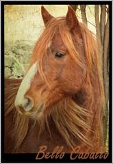Bello Caballo (Sigurd66) Tags: españa horse caballo cheval spain huesca echo aragon espagne cavallo cavalo osca paard cavall hecho jacetania uesca rubyphotographer baldecho