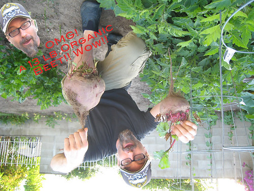 My 13 lbs. organic beet