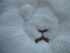 had my first stab at needle felting ... (RaggyRat) Tags: face felted felting lion needle scissor sporran scultping