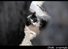 Gato encerrado (jorgearquero) Tags: cat pueblo gato almera cortijo escapada oria campillodepurchena