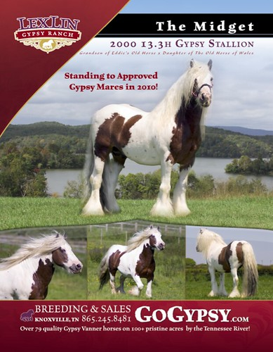 The Midget's Stallion Page
