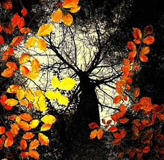Spirit of Autumn (Porgyfish) Tags: park uk autumn trees light england tree leaves nikon estate united kingdom cotswolds gloucestershire bathurst breathtaking cirencester p6000 superaplus aplusphoto breathtakinggoldaward porgyfish updatecollection breathtakinghalloffame