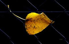 FRONTERAS (Licy (Iris de Paz)) Tags: vosplusbellesphotos tff1 atomicaward