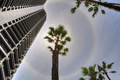 Sun Ring and Palms in the work place (Ken Summers) Tags: sky sun clouds haze nikon palm ring perth hdr qv1 tonemapped sporaxis