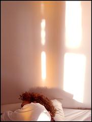 day1352 sat28nov2009 (a.pic.a.day) Tags: sleeping sleep 365 shadowplay kater sleepingbeauty slapen beautysleep project365 slaapje 365days apicaday onephotoperday 365project httpapicadayblogwordpresscom