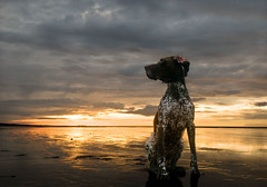 Patience (Dani℮l) Tags: sunset sea dog holland reflection beach netherlands strand waddeneiland nikon weekend daniel tide nederland shell noordzee victor northsea groningen nikkor stroll friesland schiermonnikoog wandeling lauwersoog d300 booreiland 1024mm