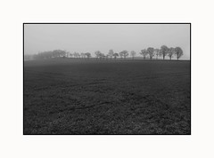 Line of Trees Shrouded in Mist in Crisscrossed  Field - Tayside Scotland (Magdalen Green Photography) Tags: trees blackandwhite bw field landscape scotland moody scottish eerie tayside crisscrossed lineoftrees scottishlandscape shroudedinmist dsc4392 mistyscene coolcurves