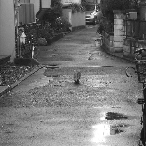 Today's Cat@20091204