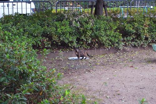 Today's Cat@20091212