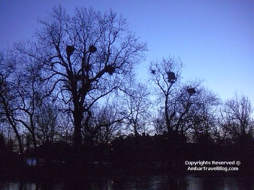Birds Nests Seen During Sunrise