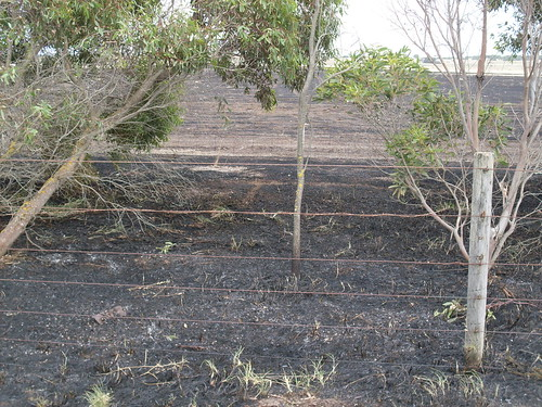 Aftermath of grass fire