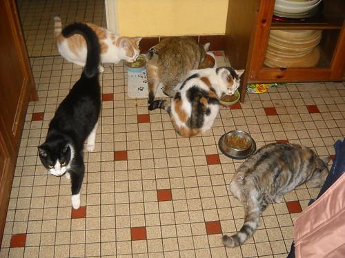 Je ne sais pas comment j'ai reussi a avoir cinq chats..... 4269884106_196933858c