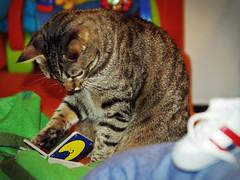 Gatto Mimmo attento lettore (Gatto Mimmo) Tags: cats moon cat reading book chat little tabby libro luna read gato gatto astronomia lettura intento scarpa leggere mimmo letteratura libretto scarpetta letture concentrazione scarpina astronomo concentrato libricino