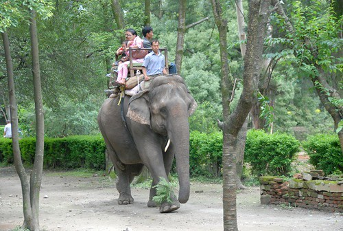 Elefantul din Kathmandu