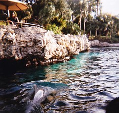 (BeeAreAyeDee) Tags: world sea film water holga orlando girlfriend exposure feeding florida cove dolphin seagull picture medium format seaworld delfin ruined 120cfn cfn
