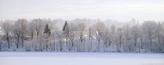 (.:Lintra:.) Tags: winter snow frost hoarfrost nikond40x catstarzhinska