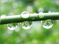 Raindrops with the Refraction of a Green Jungle - Nature in my Garden (Batikart ... handicapped ... sorry for no comments) Tags: sky plant abstract flower color colour macro reflection tree green art texture nature water grass rain closeup canon germany garden geotagged deutschland droplets leaf drops spring wasser europa europe dof bokeh background natur meadow wiese himmel drop refraction gras grn reverse waterdrops makro effect 500faves garten spiegelung baum regen 2010 frhling fellbach badenwrttemberg frhjahr swabian canonpowershota610 perfezione 100faves 50faves 200faves mywinners abigfave viewonblack 300faves platinumphoto colorphotoaward 400faves 600faves batikart 700faves 800faves newgoldenseal mygearandmepremium mygearandmebronze mygearandmesilver