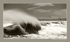 Spray (marcowind) Tags: sea italy beach nature water canon landscape blackwhite italia mare wave abruzzo abruzzi rosetodegliabruzzi bellabruzzo alemdagqualityonlyclub