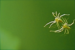 itsy bitsy spider (Tomitheos) Tags: portrait reflection closeup photography spider flickr image spiders avatar stock picture optical pic daily photograph species fangs capture now arachnids widow today supermacro arthropods creepycrawlies 2010 predators venom araneae charlottesweb carboniferous cephalothorax herbivorous chelicerae araneomorphae mygalomorph mygalomorphae spinnerets chelicerate bej mywinners orbwebspiders flickrdiamond platinumheartaward thewebsite tagmata mesothelae bytomitheos devonianperiod platinumpeaceaward 02192010 silkgenes thinkgreenecology transubstantiates