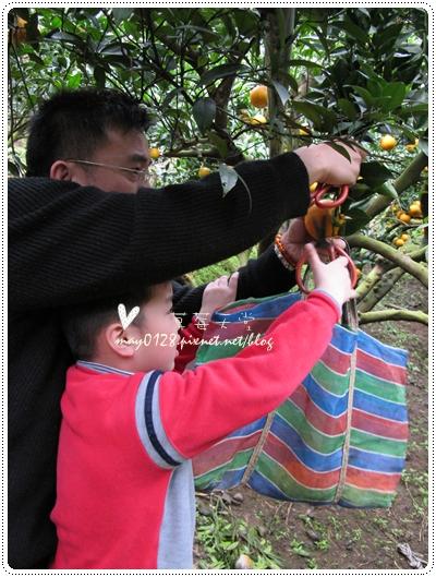 關西採草莓橘子牛欄河2010.02.20-27