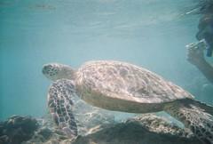 0000002-R1-020-8A_010 (Moustachios) Tags: hawaii snorkeling hanaumabay